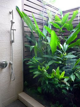 Glass shower with large tropical plant.
